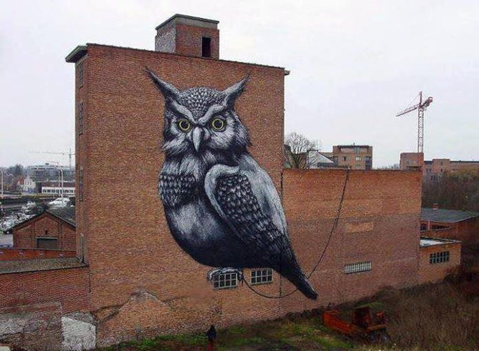 An enormous owl stares straight into the camera in this wildlife street art work by Belgian graffiti artist ROA